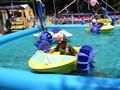 オーサカキング2008(オーサカキンギョ) 水遊び