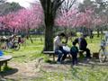 久宝寺緑地公園 お花