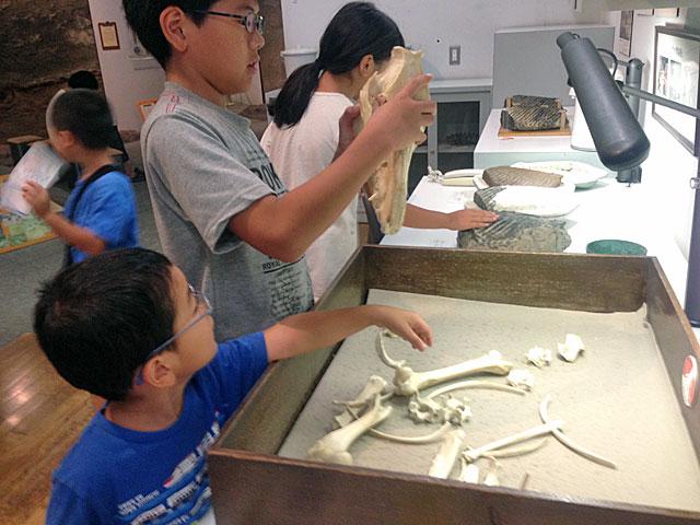 琵琶湖博物館 展示