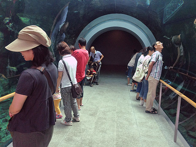 琵琶湖博物館 水族館