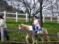 おおさか府民牧場 乗馬体験
