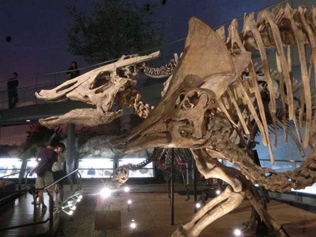 福井 恐竜博物館 所要時間