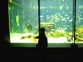 和歌山県那智勝浦 串本海中公園 水族館
