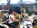 芝政ワールド 動物王国