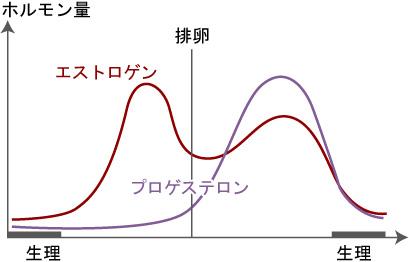 基礎体温とホルモン