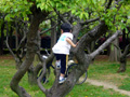 長居公園 木登り