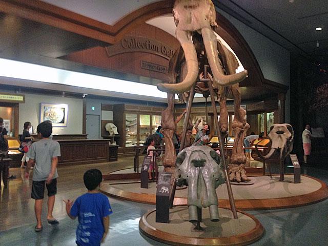 琵琶湖博物館 見学