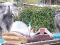 枚方パーク 遊園地