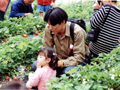 川西観光苺園