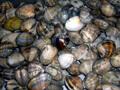 和歌山県 片男波で潮干狩り&マリーナシティ