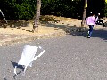 大阪城公園で凧揚げ