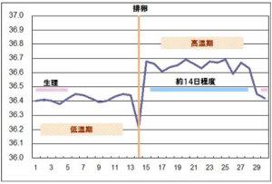 基礎体温と排卵周期